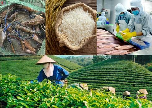 Bảo vệ thương hiệu nông sản Việt để gia tăng giá trị xuất khẩu - Ảnh 1.
