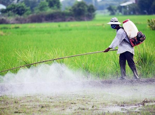 Các loại thuốc bảo vệ thực vật (BVTV) chứa hoạt chất Glyphosate khỏi danh mục được phép sử dụng ở Việt Nam.