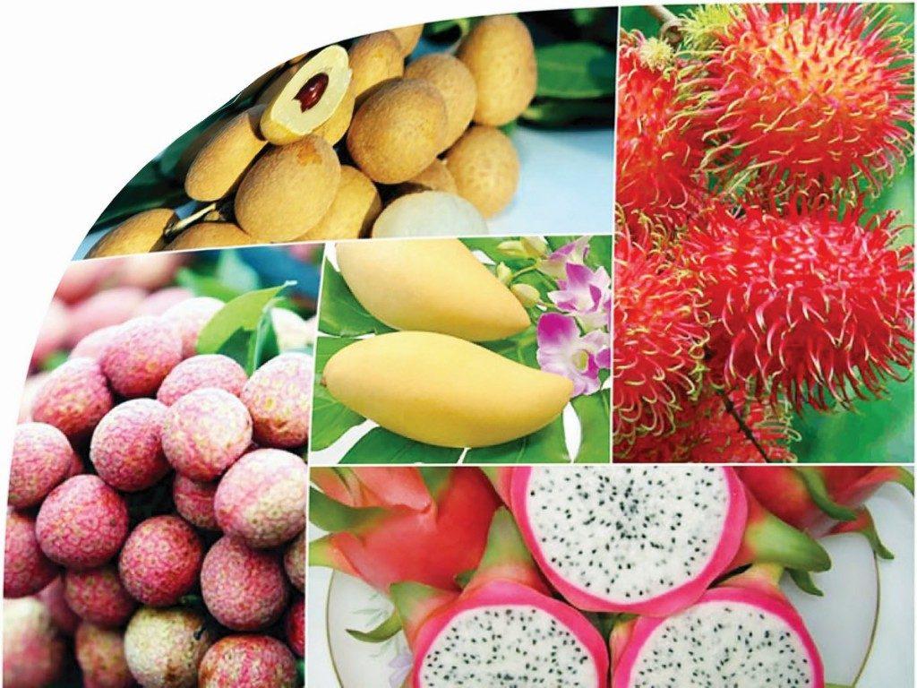 Nông sản Việt trước 'vận hội'  FTA thế hệ mới - Ảnh 1.